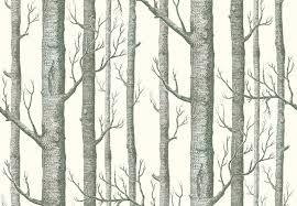 44 birch tree wallpaper