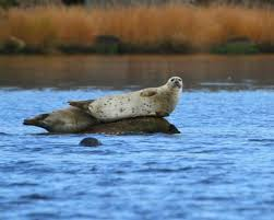 Rhode Island wildlife tours images Save the bay seal watch nature cruises newport ri top tips jpg