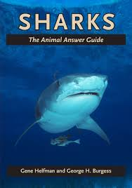 facts about sharks sport fishing