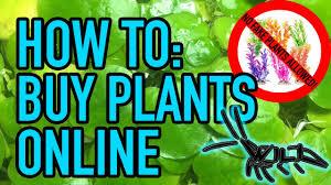native pond plants for sale how to buy aquarium plants online us aquatic plants vendors