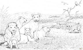 printable 24 realistic lion coloring pages 7501 lion pride and