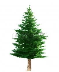 clip art pine trees many interesting cliparts