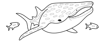 Sharkwhale Clipart Coloring Pencil And In Color Sharkwhale Coloring Pages Sharks Printable