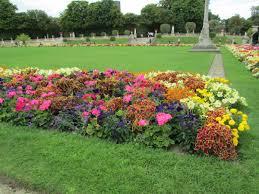 free images tree plant lawn backyard soil botany flowers