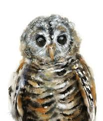 15 best owl watercolor images on pinterest fishing owl