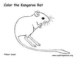 coloring page of a rat kangaroo rat coloring page