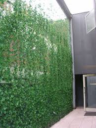 best 25 balcony privacy screen ideas on pinterest patio privacy