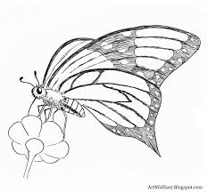 drawn butterfly side view pencil and in color drawn butterfly
