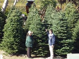 Christmas Tree Pick Up Where To Pick Up O Christmas Tree Manhattan Beach Ca Patch
