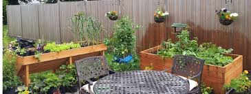 how to grow vegetables in containersgreenside up