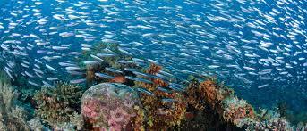 conservation of ocean environment wwf australia wwf australia