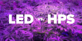 led marijuana grow lights using led grow lights to grow cannabis cirrus led grow lights