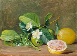 Foliage Flower - foliage flowers and fruit of a variety of guava marianne north