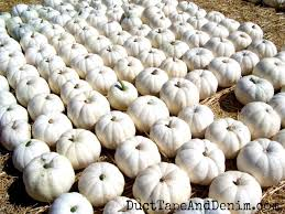 white pumpkins 5 ways to decorate with white pumpkins in your fall decor