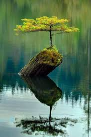 4 answers what are the world s most beautiful trees