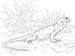 Common Collared Lizard Coloring Page Free Printable Coloring Pages Reptile Coloring Pages
