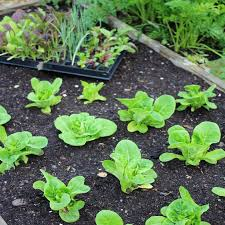 advice for uk raised bed vegetable growers inc discounts on beds