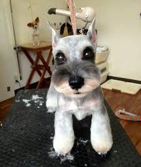 asian dog ring holder images 29 best dog grooming salon decor ideas images dog jpg