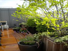 gardening rooftop garden design with bamboo fence terrace deck