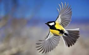 flying birds wallpapers awesome flying birds pictures and