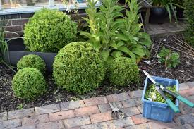 Garden Topiary Wire Forms How To Prune Box Balls And Topiary An Englishman U0027s Garden Adventures