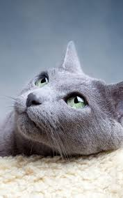 cat looking up lockscreen android wallpaper free download