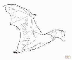 bats coloring pages eliolera com