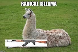 Llama Meme - llama memes imgflip