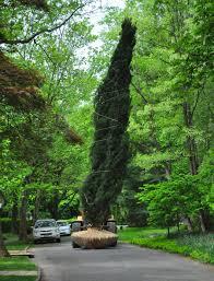 large tree install kales nursery landscape service nj pa ny