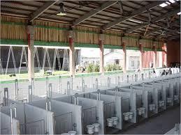 Plastic Calf Hutches Calf Hutch Individual Plastic Indoor Calf Zone Cowhouse