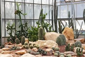 34 sharp cactus garden ideas décoration de la maison