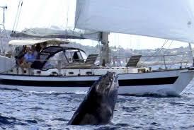 falmouth boat rental sailo falmouth ma cruiser boat 1011