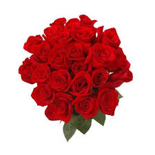 how much does a dozen roses cost how much does a dozen roses typically cost in chennai quora