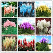 400pcs bag pas garss pas seeds pas grass plant ornamental