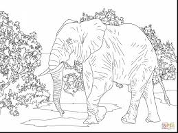 superb animal coloring pages clip art africa coloring pages