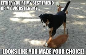 Your The Best Meme - best friend meme omg your my best friend everrrrrrrr you re image