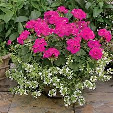 indoor herb garden u2014 marifarthing blog indoor flower gardening