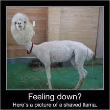 Feeling Down Meme - feeling down