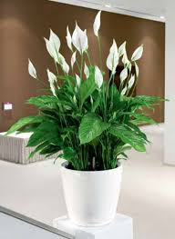 plant for office office plants