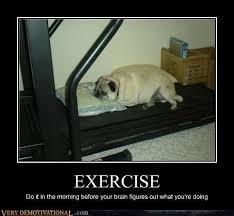 Treadmill Meme - fat dog asleep on treadmill