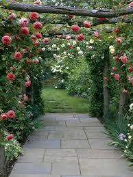 Types Of Flower Gardens Types Of Fragrant Climbing Plants Hgtv