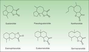 allergic contact dermatitis to plants understanding the chemistry