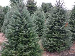 trees u0026 wreaths u2014 cw christmas trees u0026 wreaths