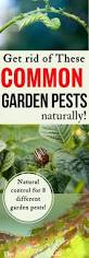 best 25 garden pests ideas on pinterest insect repellent plants