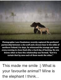 Hairless Bear Meme - 25 best memes about elephant elephant memes