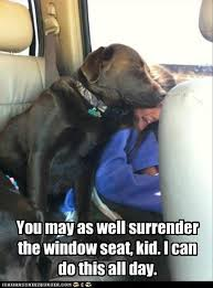 Chocolate Lab Meme - attack of the funny animals dumpaday 18 dump a day