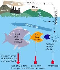 mercury in fish wikipedia