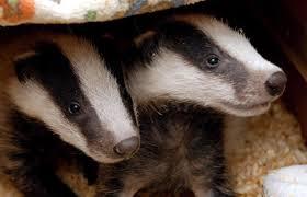 new ukip leader i could strangle a badger u2013 politico