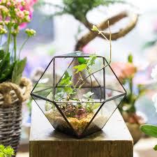 online buy wholesale succulent terrarium from china succulent