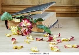 Drying Flowers In Books - dry flower book stock photos u0026 dry flower book stock images alamy